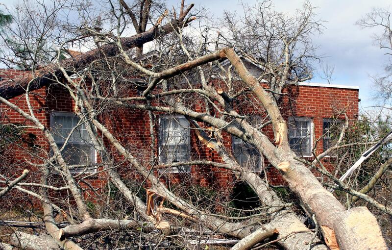 trees fallen on a building