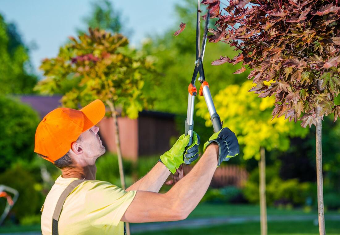 tree service worker doing tree pruning